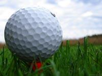 Golf-Ball-In-Grass